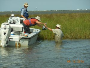 L-R: Thomas Nickles (U. Tennessee), Annette Engel (U. Tennessee) and Erick Swenson (LSU) carefully handle samples collected along a marsh edge in Terrebonne Bay. (Photo credit: Tiffany Warner, LUMCON)