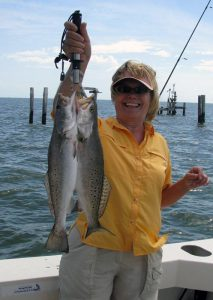Speckled trout (spotted sea trout)