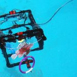 Team Santa Rosa's ROV targets a lionfish during the Deep-C ROV competition at Dauphin Island Sea Lab. (Photo credit: Tina Miller-Way)